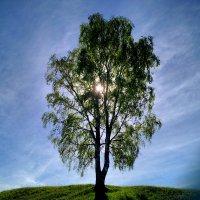 Солнце в листьях :: Наталья Левина