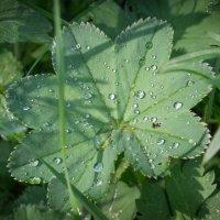 Капли дождя :: Олег Козлов