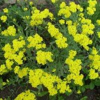 Желтые цветы :: Анатолий