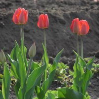 цветы :: Екатерина Зуева