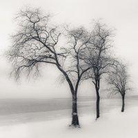 Сплетение ветвей.. :: Yuriy Puzhalin