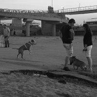 Собаки :: Арсений Корицкий