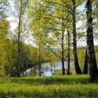 Лесное озеро. :: Александр Гурьянов