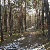 Ранняя весна :: Владимир Бровко