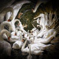 лебединый путь :: Slava Hamamoto
