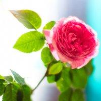 Цветок :: ViP_ Photographer