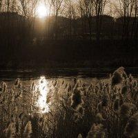 Неман на закате :: Владимир Степанчук
