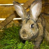 Кролики :: ViP_ Photographer