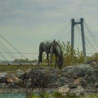 конь :: Роман Кондрашин