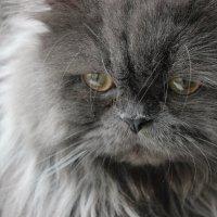 самый обычный кот :: Виктория Зуева