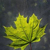 Когда грустишь по осени... :: Ирина Котенева
