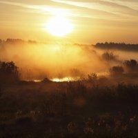 Утром :: Андрей Зайцев