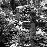Питер. Смоленское кладбище. :: Михаил Розенберг