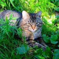 В траве :: Катя Бокова
