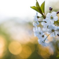 Весна :: Daria Bozakina