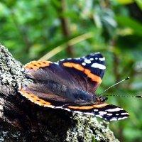 Бабочка :: Валерий Викторович РОГАНОВ-АРЫССКИЙ
