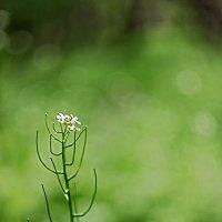 Цветочки-лепесточки :: Владимир Самсонов