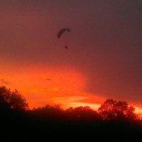 Полет на закате :: Виталий Житков