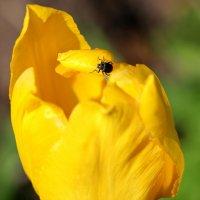 цветок :: Андрей Степанов
