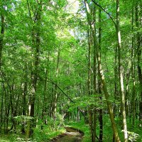дорога в летнем лесу :: Александр Швыркунов