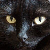 """Чёрный 5. """"Смотри мне в глаза......."""" :: Михаил MAN"""