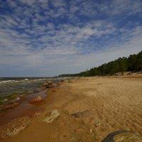 Берег Финского залива :: Олег .