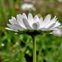 Цветок :: Yuriy V