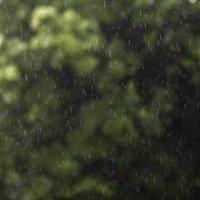просто дождь :: Tatiana Florinzza