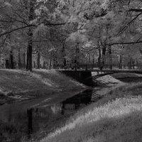 Таврический сад :: Татьяна Горд