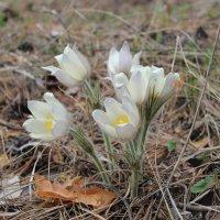 Первые цветы :: Виталик Тюрин
