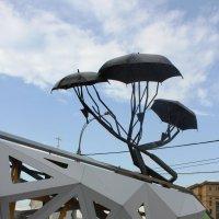 Сибирские зонтики :: Наталья Золотых-Сибирская
