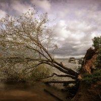 После грозы. :: Валерий Молоток