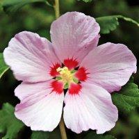 цветок :: Юлия Данилец
