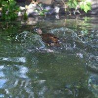 к чёрту свои крылья,водяные,вот это вещь !!! :: Алексей -