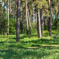 Лесные тропы :: Анатолий Казанцев