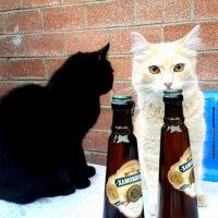 Ну что друг, по пивасику! :: Михаил Столяров