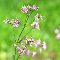 цветы :: Елена Сова