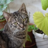 во саду ли,в огороде...?) :: Галина R...