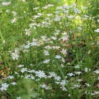 Лесные цветы :: Людмила