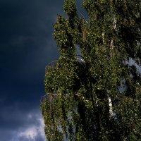 Перед грозой :: Олег Петушков