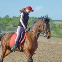 Норовистая лошадь :: Валерий Талашов