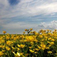 Солнечное поле. :: Тамара Бучарская