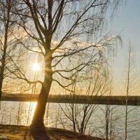 Вечернее солнышко. :: Виктор Евстратов