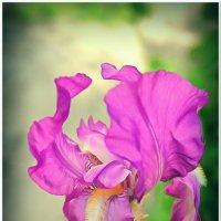Цветок #1 :: Евгений Кочуров