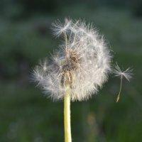 в ожидании ветра... :: Андрей Вестмит