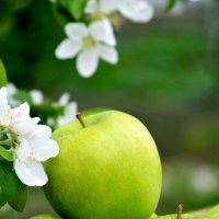 Яблочное настроение :: Алена Рыжова