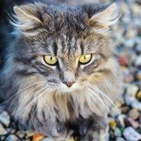 Кошка полна тайны, как зверь :: Эллина Филиппенкова