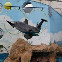 Полет дельфинов!!! :: Николай Кононцев