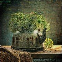 Чайник без ручки :: Ольга Мальцева