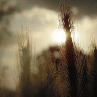на закате солнца :: Дианка Шитько